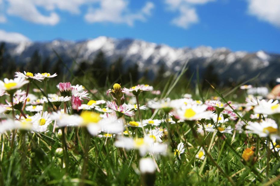 Zomer lente